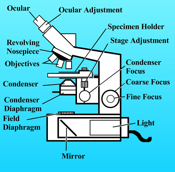 diagram of the compound microscope