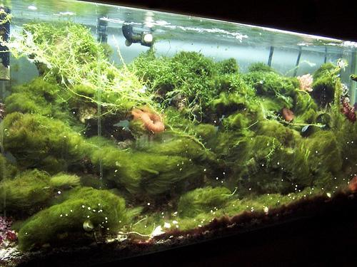 Creating a no entry board for algae for Fish tank algae remover