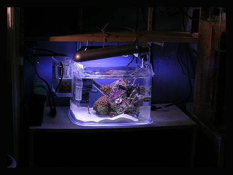 setting up a pico reef tank no easy task reefland com