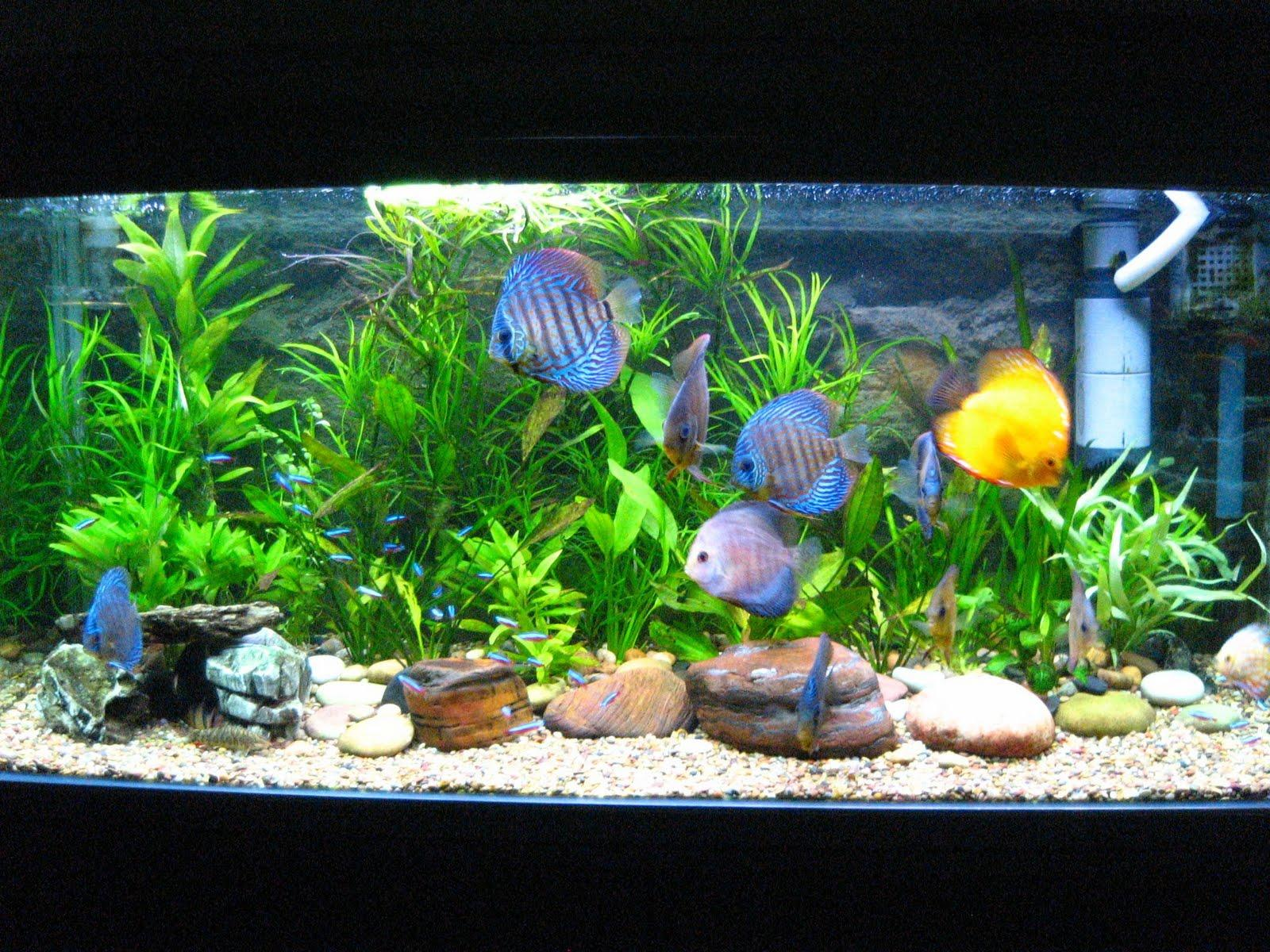 Fish Diseases Your Fish Might Get,freshwater aquariums,aquariums ...