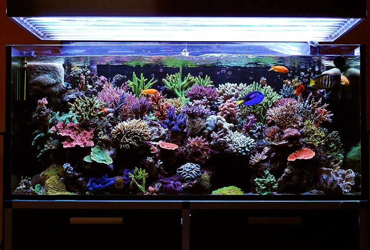 Photographing your reef tank for Fish tank camera