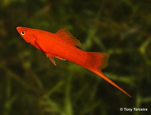 Fish for Brackish Tank Reefland.com
