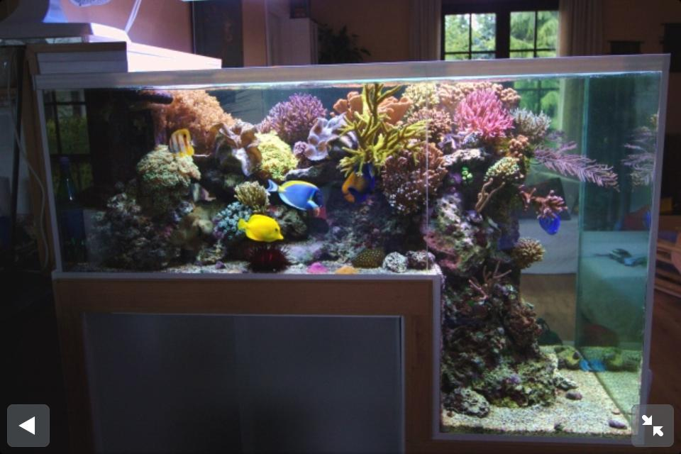 Reef aquariums for your inspiration for Marine fish tanks