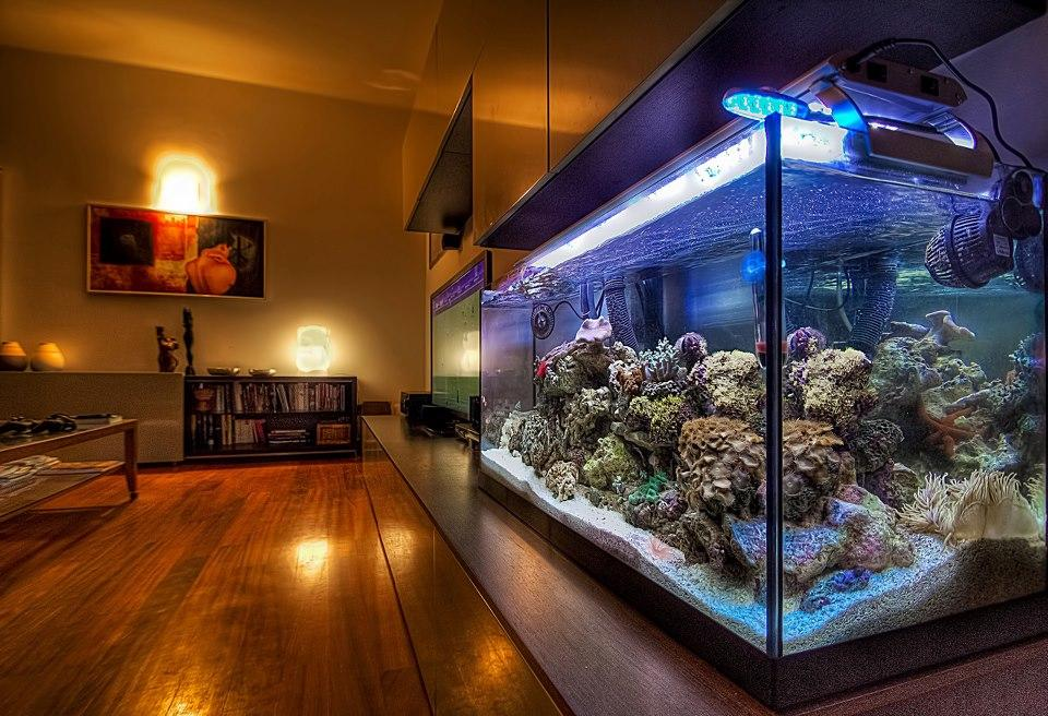 a review of the important aspects in maintaining a marine reef aquarium