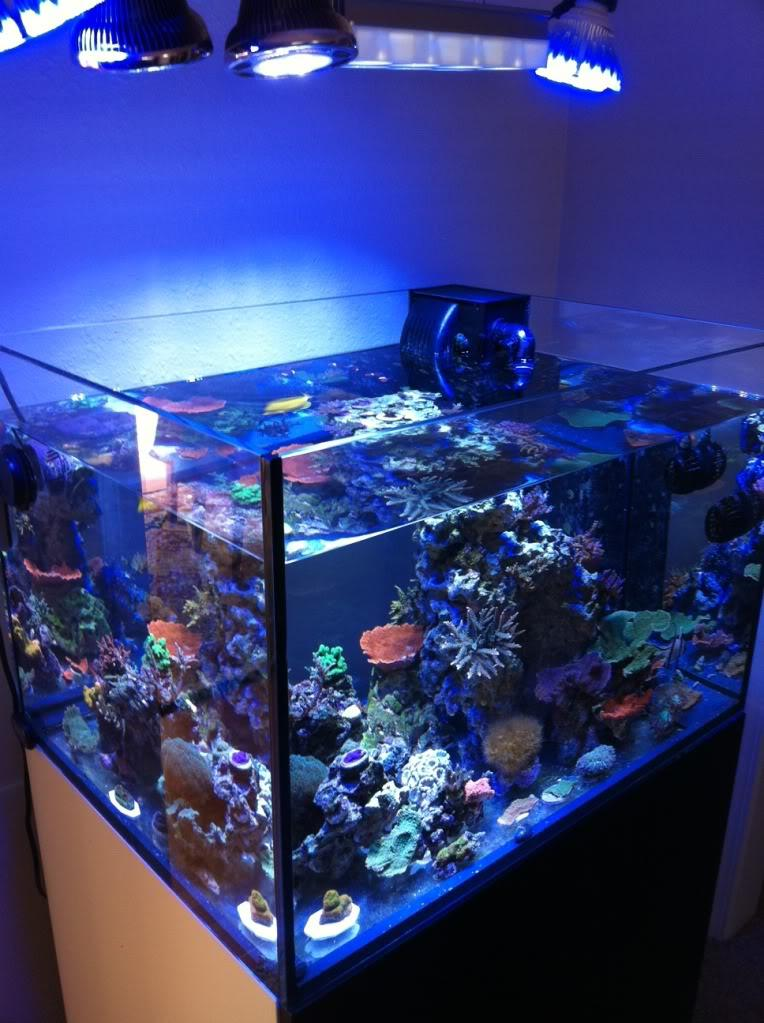 Reef aquariums for your inspiration for Reef tank fish