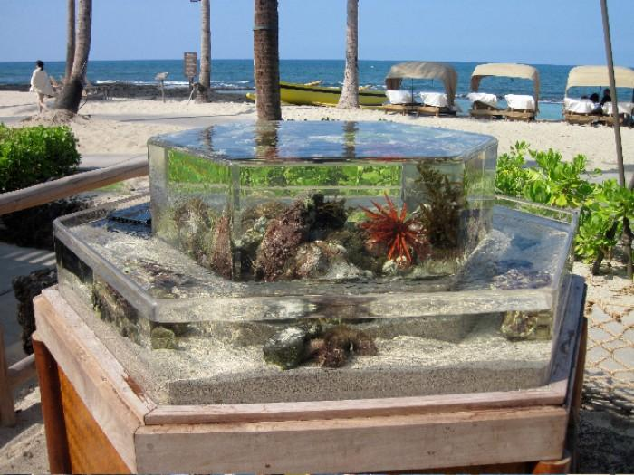 The infinity zero edge aquariums for Outside fish tank