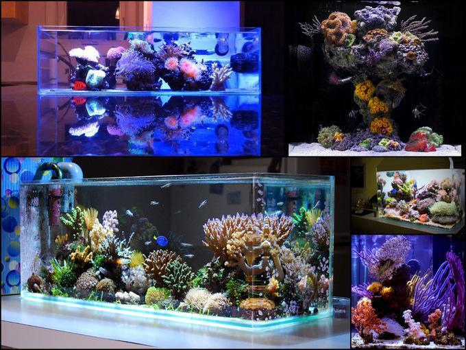Aquascape Nano Reef Tank