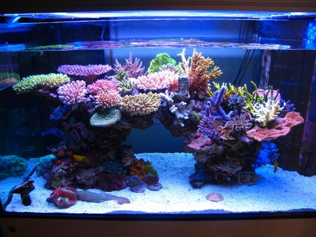 Beautiful saltwater aquarium images for Saltwater fish tank